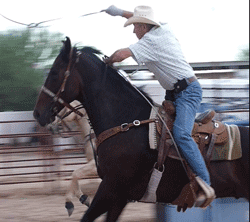 Red Hot Cashy Qh Gelding roping at Cave Creek